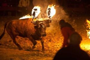 Toro Júbilo en Medinaceli
